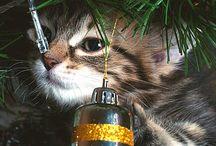 Christmas for animal lovers