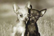 cute tiny dog