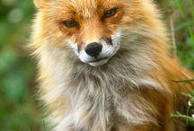 Djur / Denna anslagstavlan handlar om söta, spännande och vackra djur.