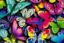 Butterflies / by Reyhan Dogan Khan