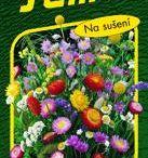 sušení květin