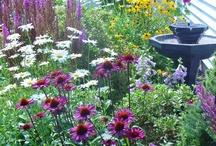 Tuin paars borders en meer