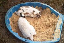 Hasen/Kaninchen/Meerschweinchen DIY's