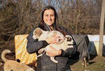 Can Dostum / Sunuculuğunu köpek eğitmeni Gamze Aral'ın yaptığı Can Dostum'da, evcil hayvan bakımı ve eğitimi, hayvan hakları, hayvan dostu ünlülerle röportajlar ve pet dünyasıyla ilgili en özel bilgiler yer alıyor.
