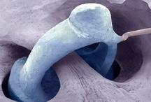 Otorhinolaryngology (ear, nose, throat)