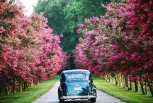 Car, traweling, flowers