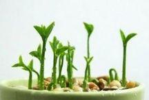 Plantas para interior & exterior