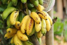 Ingrediënten van Sri Lanka