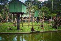 Lugares para visitar em Manaus/AM.