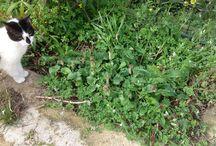 plants / garden and surroundings