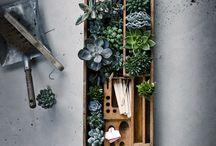 Garden / by Emma Hoyle