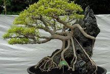 Árbol en Roca