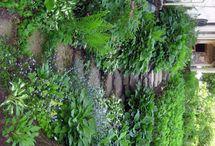 My Dream Garden / by Becky Deal