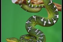 Exotic Pets I Have / by Thomas Byers