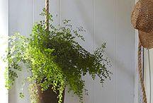 Le Jardin / Indoor and outdoor!