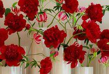 Bloem rood red flowers