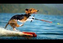 Deporte animal