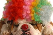 bulldog love / by Kathleen Nugent