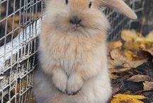 Lovely bunnies <3