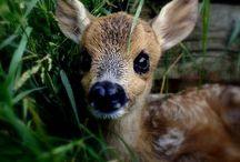 Bebés / Los más bellos bebés de todas las especies.
