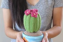 Cactus / Fiori e piante