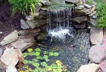 pond backyard