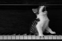 Kitty / by Nicole Marie