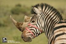 WWF Awareness