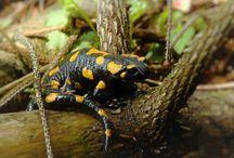 Zwierzęta / Fotografie zwierząt leśnych i domowych