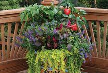 Container Garden / Container garden photography, tutorials, ideas, garden ornaments and sculptures, Gardening how-to's / by Emily Bellamy