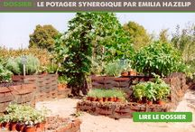 POTAGER ALTERNATIF