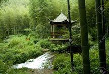 China, Pandas & Habitat
