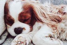 Pets ✨