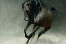 <3 Equus <3 / by Amber Kelley