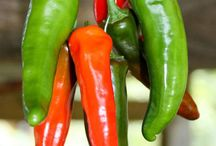 Preserving Peppers/Chillies