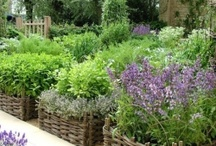 Herb garden containers / pretty unusual herb containers