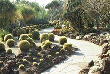 "Client Project: ""WILD"" Cactus & Succulent Gardens / Extreme gardens: succulents, cacti, natives, etc. Los Angeles, CA"