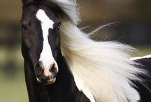 FOTOGRAFIE : HORSES / FOTOGRAFIE :  HORSES
