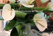Winter met anthuriums