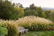 trawy