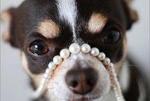 Dogs  / I love them...