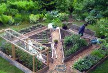 Odlingsträdgård