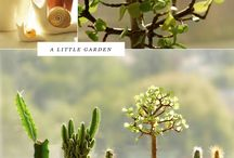 Plants / by Joey Loftus