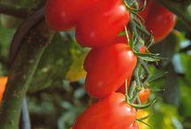 Urban Gardening / Trick und Tipps für deinen Balkongarten