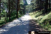 Usedom-Radtour 2005: Tag 4: Trassenheide - Zinnowitz - Zempin - Koserow - Kölpinsee - Ückeritz - Bansin - Heringsdorf - Ahlbeck / Sie sehen hier eine Auswahl meiner Fotos, mehr davon finden Sie auf meiner Internetseite www.europa-fotografiert.de.