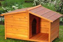 Casas perros
