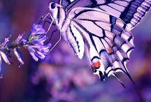 The Color Purple / by Karen Roerdink