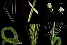l art des formes végétales
