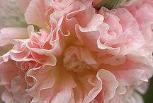 Favorite flowers / by Carla Norris