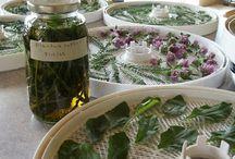 herb gardening and storing